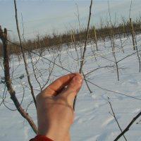 Branch Training Rod